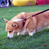 Coronavirus : comment promener son chien sans prendre de risque ?