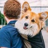 Il part travailler avec sa chienne sur le dos et filme la réaction des gens (Vidéo) !