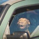 Cet homme a sauvé in extremis un chien suffoquant dans une voiture