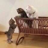 Un nouveau foyer et une nouvelle maman pour ces deux chatons abandonnés