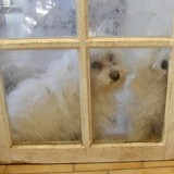 Une éleveuse qui maltraitait 122 chiens et chats, condamnée à une maigre peine