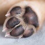 Covid-19 : faut-il désinfecter les pattes de son chien après les balades ?