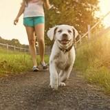 5 astuces pour protéger les coussinets de votre chien du sol brûlant