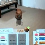 Cette application vous permet d'adopter un chien virtuel !