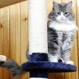 3 activités pour maintenir son chat stérilisé en forme