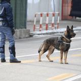 Covid-19 : la NBA fait appel aux chiens renifleurs pour détecter les cas positifs chez les spectateurs