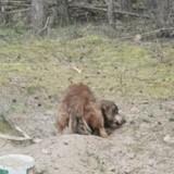Pauvre créature dans la forêt : les sauveteurs luttent contre leurs larmes