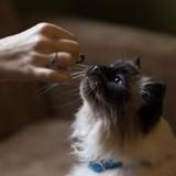 Croquettes pour chat senior à prix mini : 3 bons plans à ne pas rater !