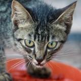 Croquettes pour chaton : 3 bons plans à prix mini