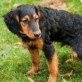 Madrid : de nouvelles sanctions contre les propriétaires de chien qui ne ramassent pas les déjections