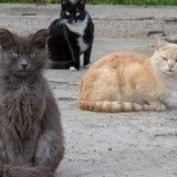 Un tueur de chats rôde dans le sud de la France, une association monte au créneau