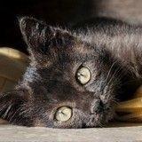 Victime de sévices à caractère sexuel, un chaton risque l'euthanasie