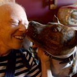 Mourante, elle n'a plus qu'un souhait : trouver une famille pour son chien
