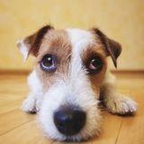 Peut-on faire confiance aux cagnottes qui aident les animaux ?