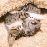 Enlacés dans une poche chauffante, ces chatons en plein câlin vont vous faire craquer