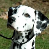 """Première en France ! Une chienne """"pédagogique"""" fait sa rentrée dans un collège pour aider les élèves"""