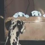 Ce Dalmatien a un film préféré, devinerez-vous lequel ? (Vidéo du jour)