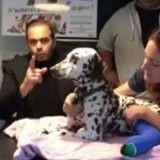 Indignation après qu'un chien a été jeté d'une voiture et roué de coups à Marseille