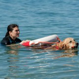 Les chiens ont-ils la notion de danger ?