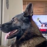 Cet ancien chien policier a une réaction hilarante quand il entend le mot « cocaïne » (Vidéo)