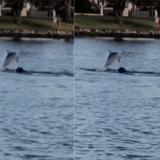 Ce chien et ce dauphin nagent ensemble comme s'ils étaient les meilleurs amis du monde (Vidéo)