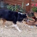 Elle adopte un Border Collie : 9 mois plus tard, un vendeur remarque un détail choquant sur le chien