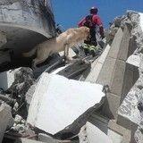 Un chien héroïque meurt d'épuisement après avoir sauvé des vies humaines