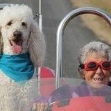 Triste nouvelle : la nonagénaire partie en road trip avec son chien est décédée