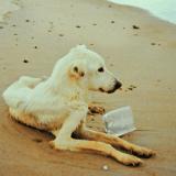 L'enfer des chiens de Puerto Rico sur la Dead Dog Beach