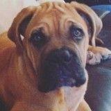 Keen'V est en deuil : son chien Ganash est décédé, il partage sa peine sur les réseaux sociaux
