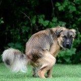 Lutte contre les déjections canines : Robert Ménard ne pourra pas ficher les ADN de chiens