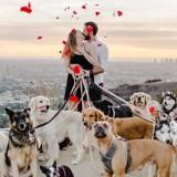 Des chiens pour une demande en mariage pas comme les autres
