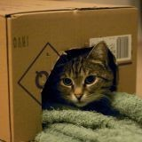 Comment déménager avec son chat ?