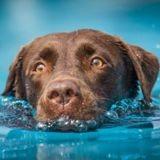 Ne dites surtout pas à ce chien courageux que sa maîtresse n'avait pas besoin d'être sauvée !