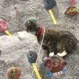 Ce chat aventurier a une passion insoupçonnée !