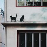 Il regarde les chats du voisin : un détail lui retourne l'estomac et il se rue sur son téléphone