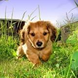 5 herbicides inoffensifs pour les animaux