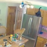 Pendant son absence, ses chats sèment le chaos : elle regarde la caméra et n'en croit ni ses yeux ni ses oreilles (Vidéo)