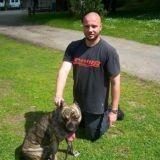 Sarthe : 2 chiens enlevés et torturés