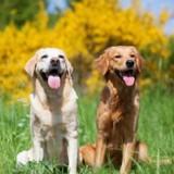 Ces deux chiens auraient pu mourir si cet ancien gendarme ne les avait pas sauvés