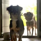 Ils ne stérilisent pas leurs chiens, quand les policiers entrent ils en ont le souffle coupé