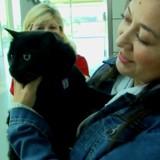 Perdu pendant 102 jours, ce chat va retrouver sa famille