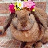 Ces 15 photos de lapins trop mignons vont vous donner envie d'en adopter un