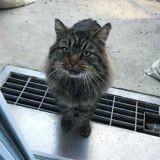 Elle trouve un chat devant sa porte et décide de lui sauver la vie