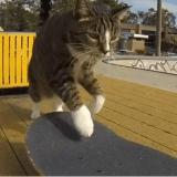 Comment Didga est devenu le plus grand chat skateur du monde (Vidéo du jour)