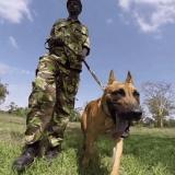 Diego, le chien qui protège les rhinocéros du Kenya contre les braconniers