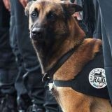Diesel va recevoir la plus haute distinction militaire pour animaux