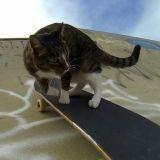 Quand le chat Didga nous donne une leçon de skateboard (Vidéo)