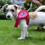 Boris Johnson adopte un chien de refuge au 10 Downing Street (et fait passer un message important)