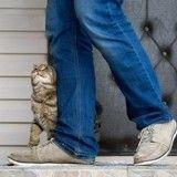 Qui obtient la garde du chien ou du chat dans le cas d'un divorce ou d'une séparation ?